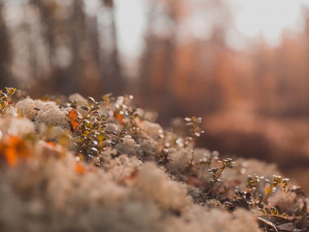 Tiro de foco seletivo de pequenas plantas que crescem nas pedras cobertas de musgo com turva