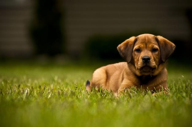 Tiro de foco seletivo de um cão adorável, deitado em um campo gramado