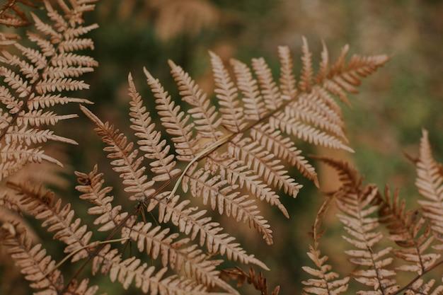 Tiro de foco seletivo de um par de ramos de samambaia de avestruz seco em um fundo desfocado