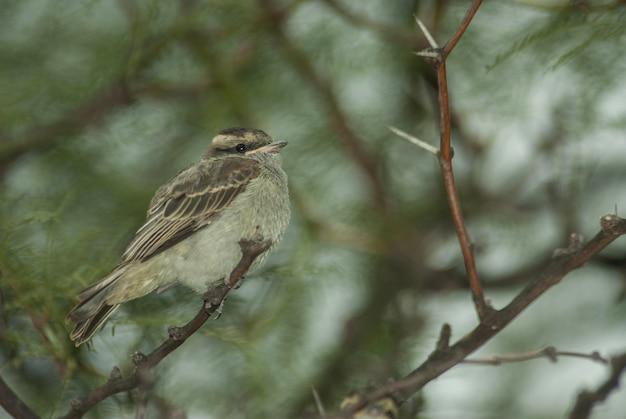 Tiro de foco seletivo de um pequeno pardal sentado no galho de uma árvore