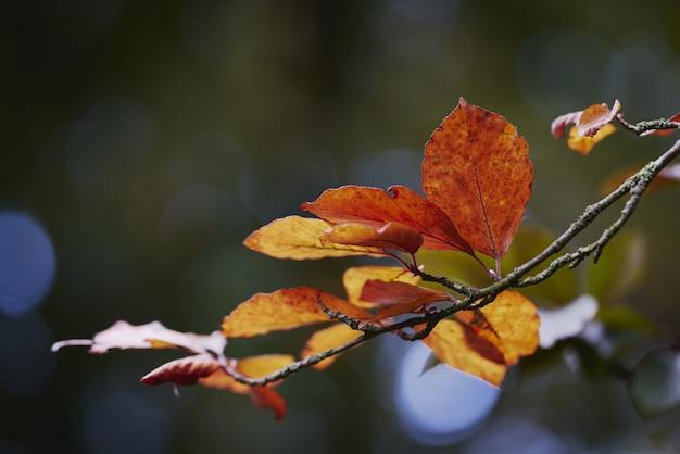 Tiro de foco seletivo de um pequeno ramo de folhas de outono amarelas