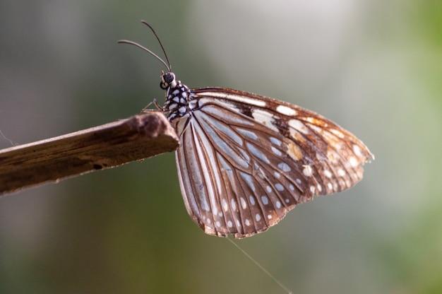 Tiro de foco seletivo de uma borboleta com os pés em um pedaço de madeira