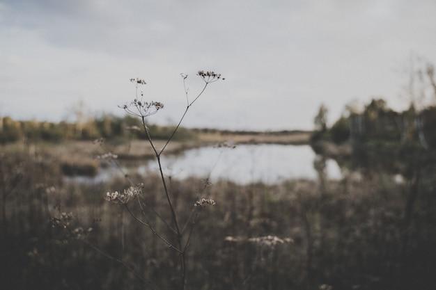 Tiro de foco seletivo de uma planta no campo com um pequeno lago no