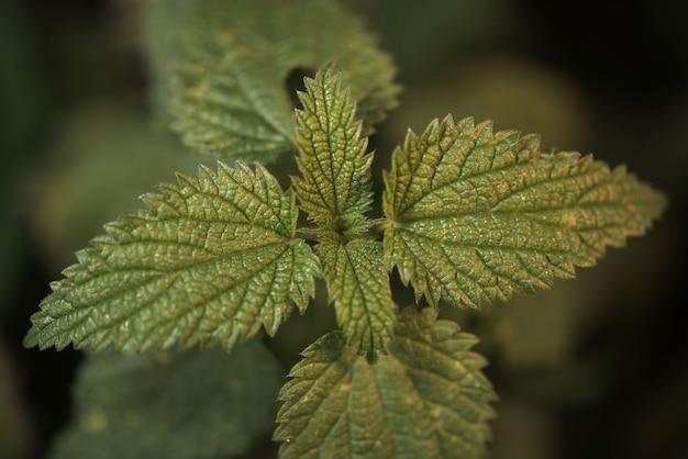 Tiro de foco seletivo de uma planta verde com folhas bonitas