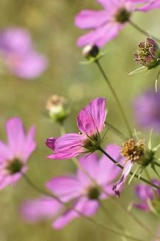 Tiro de foco seletivo vertical de lindas flores roxas em um jardim