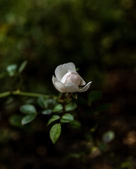 Tiro de foco seletivo vertical de um lindo jardim branco rosa