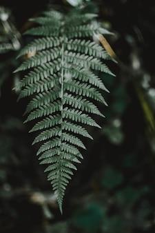 Tiro de foco seletivo vertical de uma folha verde exótica em uma selva misteriosa tropical