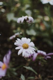 Tiro de foco seletivo vertical de uma linda flor branca em um jardim
