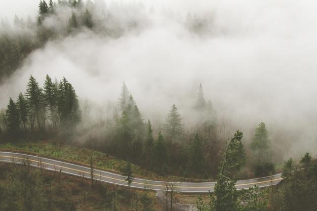 Tiro de grande angular de várias árvores ao lado de uma estrada coberta de nevoeiro