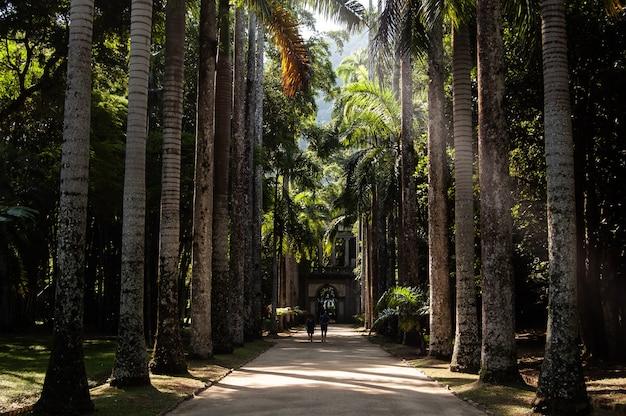Tiro de longo alcance de duas pessoas andando em um caminho no meio de coqueiros em um dia ensolarado