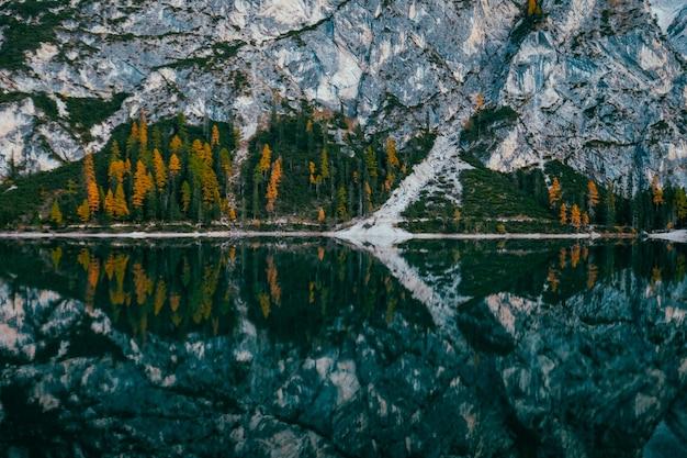 Tiro de longo alcance de pinheiros amarelos e verdes perto da água e da montanha