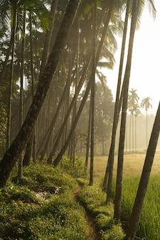 Tiro de manhã da vila com coqueiros e arrozais