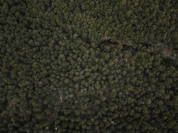 Tiro de quadro completo de árvores tropicais verdes