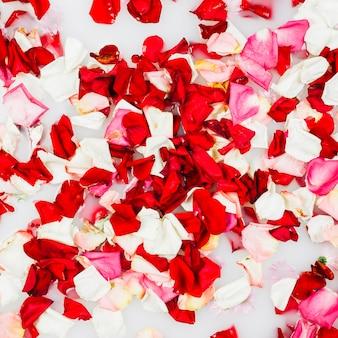 Tiro de quadro completo de pétalas de flores delicadas coloridas