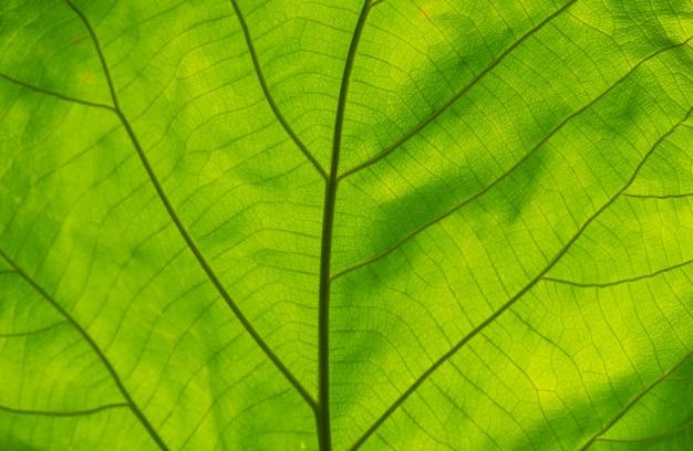 Tiro de quadro completo de textura de folha verde.