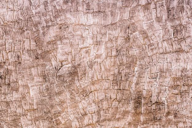 Tiro de quadro completo de tronco de árvore áspero