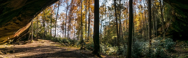 Tiro horizontal de árvores e plantas em uma floresta durante o dia
