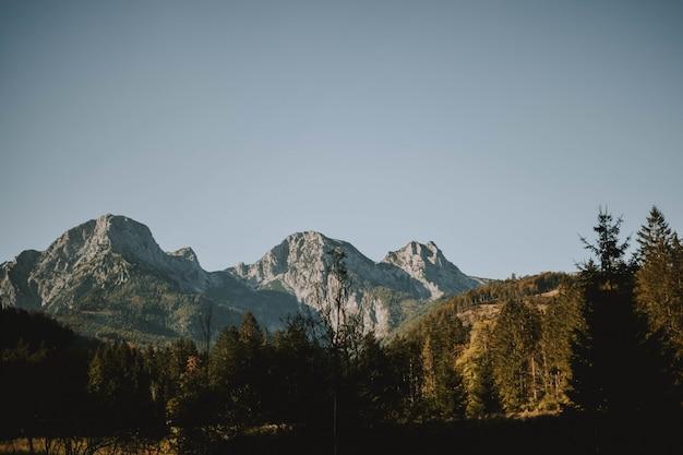 Tiro horizontal de montanhas brancas e floresta sob um céu claro