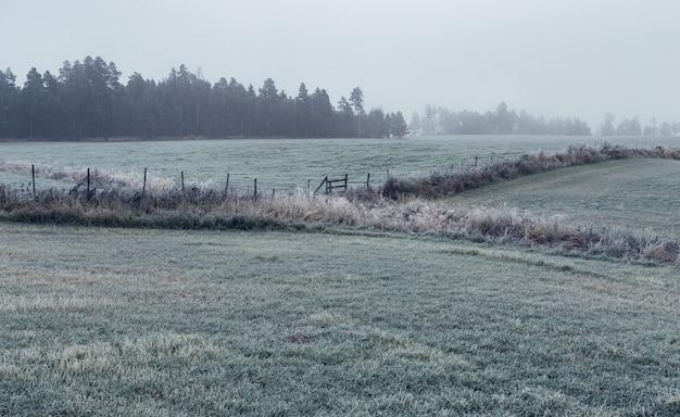 Tiro horizontal de um campo verde com uma grama seca, cercada por pinheiros cobertos de nevoeiro