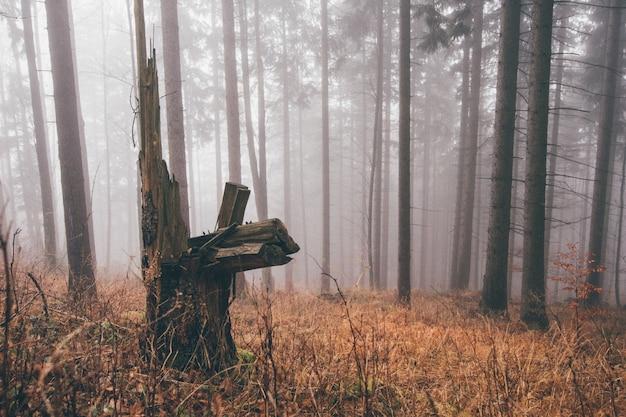 Tiro horizontal de um tronco em uma floresta nublada, cheia de grama seca e árvores sem folhas