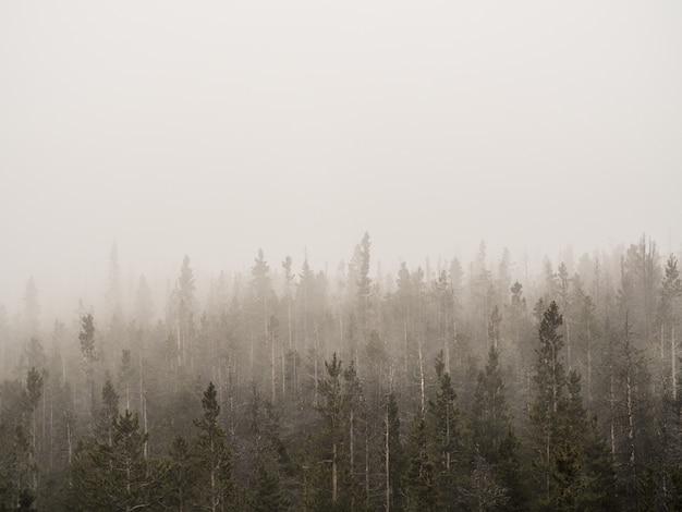 Tiro horizontal de uma floresta nublada com árvores altas, cobertas de névoa