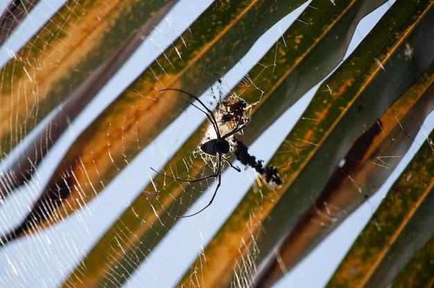 Tiro macro da fotografia de uma aranha preta que tece uma teia de aranha em um fundo vlurred