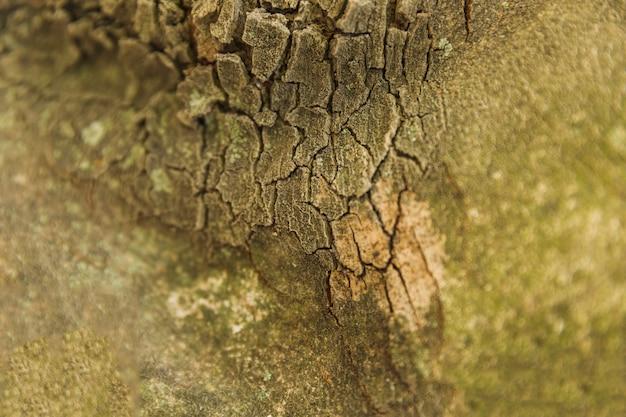 Tiro macro, de, antigas, tronco árvore, latido