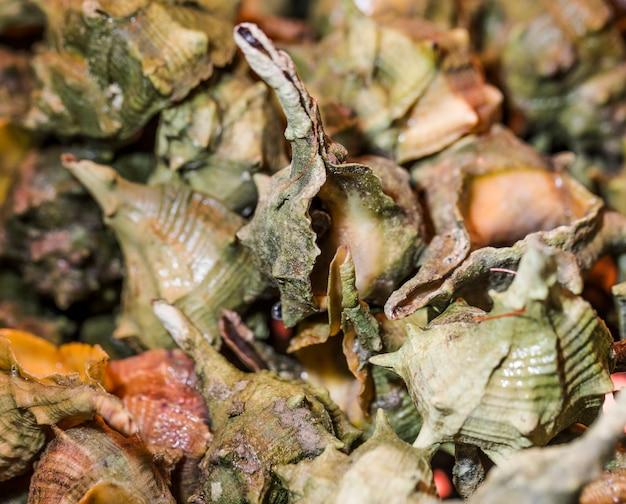 Tiro macro de frutos do mar frescos