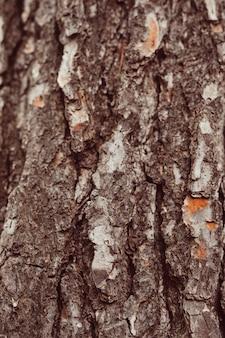 Tiro macro de madeira