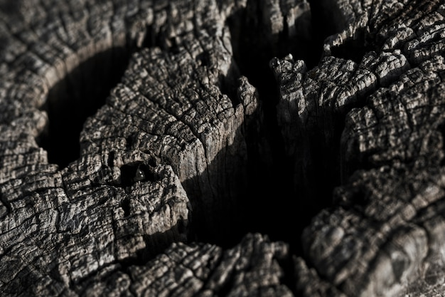 Tiro macro de textura de madeira