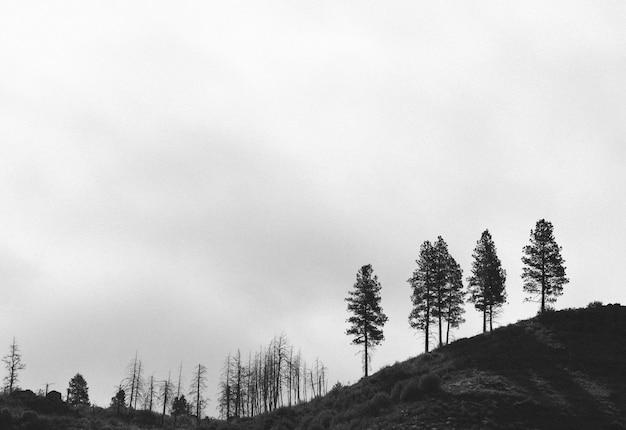 Tiro preto e branco melancólico de uma floresta
