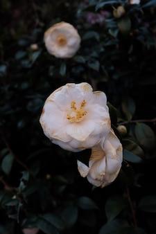 Tiro seletivo closeup de uma flor branca com folhas verdes
