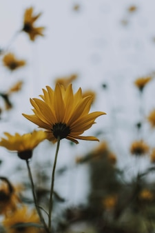 Tiro seletivo vertical de uma flor amarela em um jardim