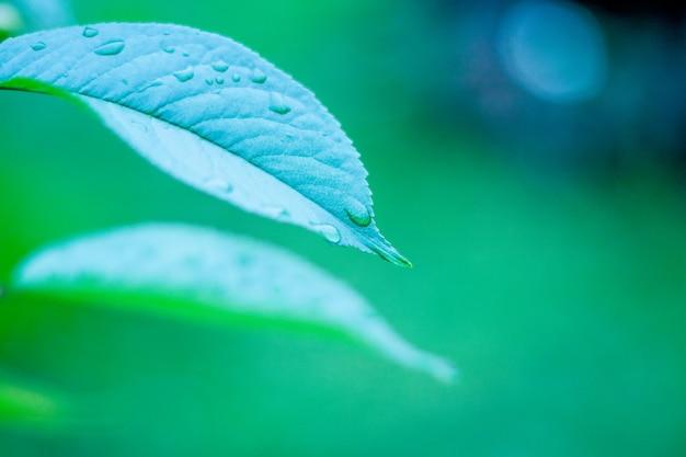 Tiro verde do macro da folha. fundo de folhagem.