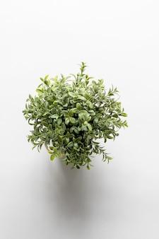 Tiro vertical aéreo de uma planta verde em uma superfície branca