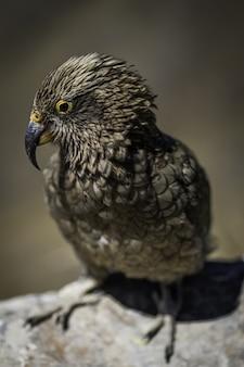 Tiro vertical closeup de coruja bonita