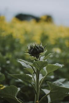 Tiro vertical closeup de uma planta com campo de flores amarelas turva