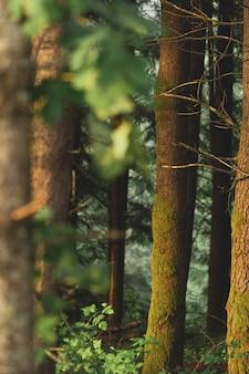 Tiro vertical da bela paisagem da floresta durante o pôr do sol