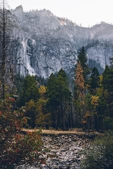 Tiro vertical da bela paisagem de árvores em uma floresta com montanhas nevadas no