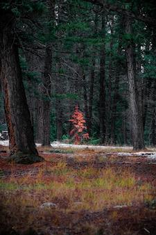 Tiro vertical da bela paisagem de outono em uma floresta cheia de árvores altas