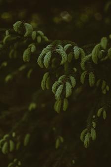 Tiro vertical da bela vegetação em uma floresta