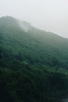 Tiro vertical da montanha nevoenta de tirar o fôlego coberto de árvores capturadas na bélgica