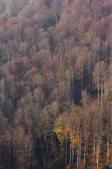 Tiro vertical das altas árvores secas na montanha medvednica em zagreb, croácia