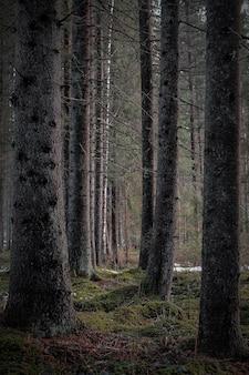 Tiro vertical das árvores altas nuas da floresta escura em um dia sombrio