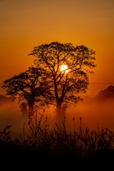 Tiro vertical de algumas árvores bonitas e o pôr do sol no fundo