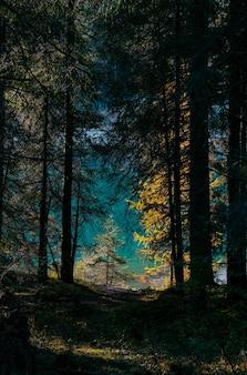 Tiro vertical de árvores amarelas e verdes na floresta em um dia ensolarado