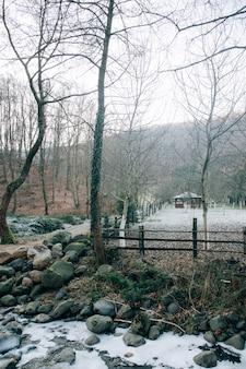 Tiro vertical de árvores nuas na floresta em um dia de inverno e uma pequena casa