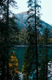 Tiro vertical de árvores perto do lago moraine e uma montanha coberta de árvores