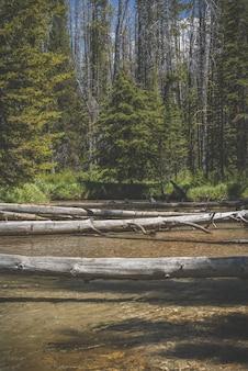 Tiro vertical de árvores quebradas sobre a água com a costa arborizada à distância durante o dia