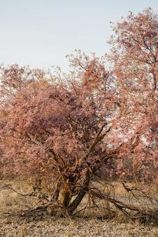 Tiro vertical de árvores secas rosa no meio de um campo